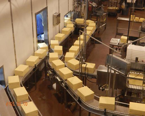 Cheese processing Conveyor belts manufacturer in Surat, Gujarat, India