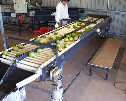 CONVEYOR BELTS FOR FRUIT