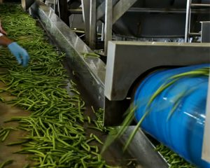 Vegetable Conveyor belts supplier in Agra, India