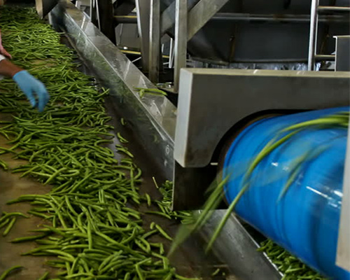 Vegetable Conveyor belts supplier in Agra, India