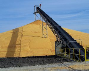 Grain Conveyor Belts supplier in Ahmedabad, Gujarat,India